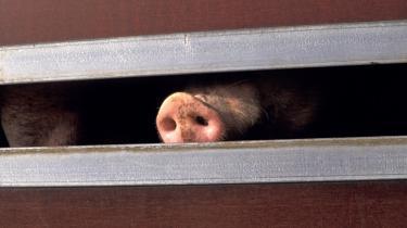 -Jeg mener ikke, at det bør være tilladt at transportere dyr mere end otte timer. Det tror jeg, der er rigtig mange, der er enige med mig i. Målet er at samle en million underskrifter,- siger Dan Jørgensen, Socialdemokraternes spidskandidat ved næste års EU-Parlamentsvalg.