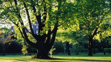 Frederiksberg blev de første skoleårs tid, husket som en vandring til og fra Fuglevangsvejens skole ad Bülowsvej, som var en stilfærdig allé med store lindetræer langs Landbohøjskolens have, som stadig virker som en umådeligt tiltrækkende enklave.