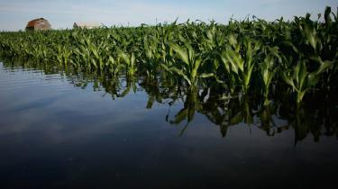Meterologer forudser, at det amerikanske Midtvesten jævnligt vil blive ramt af tropisk-lignende regn. Det kan true bioethanolproduktionen og give store prisudsving.
