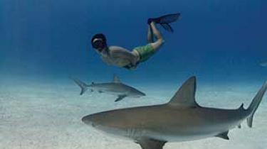 Den canadiske biolog og undervandsfotograf Rob Stewart er en mand med en mission. Han vil redde verdenshavenes hajer