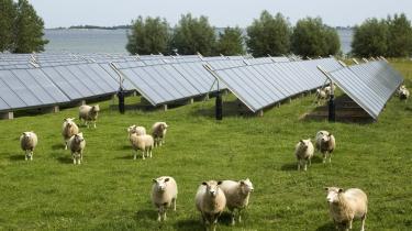 Fårene gnaver græsset mellem de blanke solfangere på Ærø. Anlægget i Marstal fylder to-tre fodboldbaner og leverer en tredjedel af fjernvarmen til byen.
