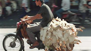 Vietnam. Dette er en nation, som lever på sadlen. På motorcykler spiser vietnameserne, sover og fører samtaler med naboen (gerne med 70 km/t og kun få tommers afstand), læser aviser, medbringer vasketøj, lufter hunden, transporterer grise, kyllinger og ænder eller arbejder fra den bærbare computer.