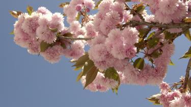 Inspiration. Huse skal bygges som træer, byer som skove, siger Michael Braungart. Kirsebærtræets frodighed og overskud af blomster er en gave til mikroorganismer, der forvandler dem til muld. Vi kan lade os inspirere af den generøsitet frem for hele tiden at gå efter effektivisering, opstramning og reduktion.