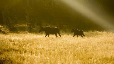 Norske romaner rummer en vidvinkel af fantasi med sære og raffinerede varianter af gammelkendte mønstre af forsvundne fædre og konfliktramte mænd i fjeldet, i skovene, på vandring ude og hjemme.