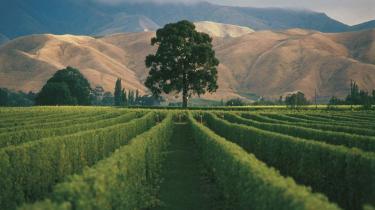 Jokeren. Klimaet har specielle fordele at byde på for den newzealandske vinproduktion - men det er også en joker i det lange løb.