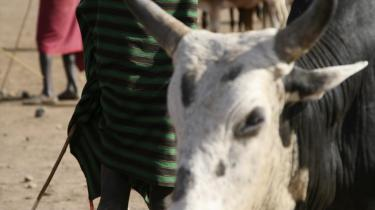 Kun få børn går i skole i Karamoja, og det skyldes blandt andet, at der ikke afsættes penge nok til uddannelse.