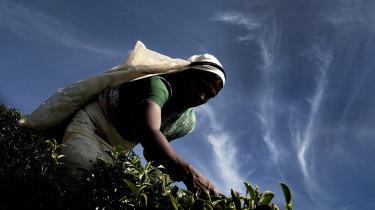 Tv-dokumentaristen Tom Heinemann har besøgt en række teplantager i Asien og Kenya og har ikke kunnet notere nogen nævneværdig forskel på forholdene på Fairtrade-certificerede plantager og traditionelle plantager. -Teplukkerne arbejder under slavelignende forhold,- fortæller han.