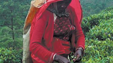 Arbejderne i Sri Lankas teplantager har så elendige livsbetingelser, at det er nødvendigt med andre former for hjælp end blot at købe Fairtrade-mærket te, siger professor Flemming Konradsen fra Københavns Universitet