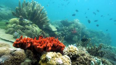 Koralrevene, der er vokset frem over årtusinder, risikerer at være væk i løbet af de kommende 20-40 år, hvis CO2-udledningen ikke begrænses voldsomt, forudsiger rapport offentliggjort op FN-s klimamøde i Poznan for nylig