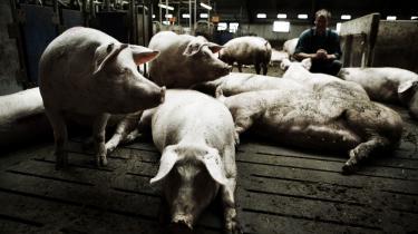 Sidste år gav landbruget et underskud på næsten en milliard kroner, hvilket fik præsidenten for dansk landbrugs egen interesseorganisation Landbrugsrådet, Peter Gæmelke, til at sige, at indtjeningen var skræmmende lav i forhold til gælden og advare mod en lavine af tvangsauktioner.