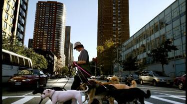 Metropol. Om hundeluftere, sorte penge, illegale immigranter, myrer i soveværelset og Dia:Beacon, hvor man finder New Yorks skønneste kunst