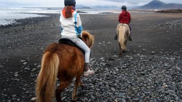 Til hest. Rolige og søde, det er hestene. De reagerer på den mindste kommando med tøjler og støvlehæl og virker, som om de har rigtig meget lyst til at brænde energi af.