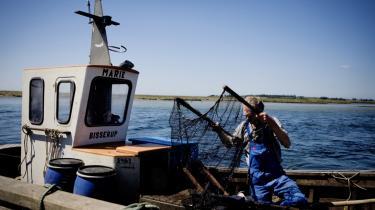 Bisserup Fiskeriforening havde i sine velmagtsdage omkring 30 fiskere, der kunne leve af fiskeriet, i dag er der kun én, der skal leve af det.