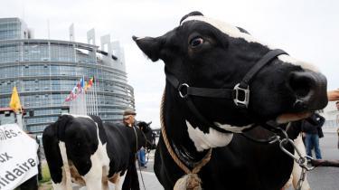 Bønder fra hele EU var ved EU-topmødet i juni mødt op i gaderne i Bruxelles med deres køer for at gøre opmærksomme på deres situation. Mælkebønderne krævede, at Kommissionen nedsætter mælkekvoterne