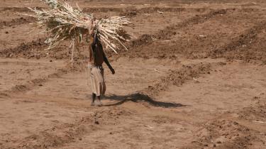 En kenyansk kvinde samler afsvedne afgrøder sammen   på en mark, så det kan bruges   til dyrefoder. Som så mange andre steder i Afrika, er   Kenya igen ramt af tørke