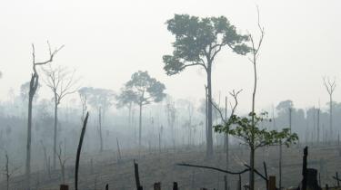 1,8 million hektar skov forsvinder hvert år fra den brasilianske Amazonas-jungle. Ændringerne i Amazonas' landområde påvirker vandressourcerne så langt væk som Tibet