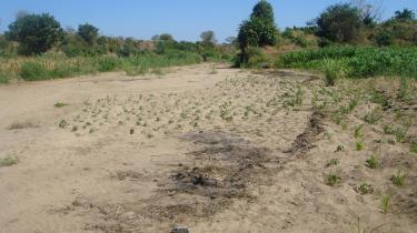 Over hele verden arbejder deltagerne med, hvordan man kan forhindre den globale opvarmning og de ødelæggelser, den medfører - her f.eks. en udtørret flod i Malawi.
