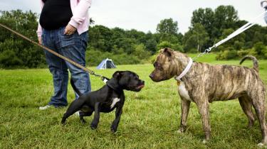Har du kærlighed og plads, så tag en muskelhund i pleje, mens dens ejer afsoner sin straf. Det lægger DF's Marlene Harpsøe nu op til.