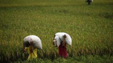 Bistanden til ulandene bør bruges på det, man har dokumenteret, virker. Det er primært en udvikling af landbruget, der er brug for - for eksempel bedre infrastruktur ved Indonesiens rismarker, skriver dagens kronikør.
