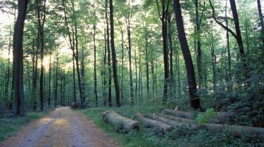 De danske skoves tilstand er 'ringe' konkluderede forskere fra DMU ved Aarhus Universitet, men Miljøministeriet fik ændret skovenes tilstand til 'god'. Fremover skal den slags bestilte rådgivningsrapporter kunne underlægges en uvildig vurdering af fageksperter, mener Videnskabernes Selskab. De vil bremse den politiske styring af forskningen.