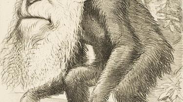 Næstformanden for det nationale forskningsråd i Italien vil have Darwins Om Arternes Oprindelse skiftet ud med Første Mosebog i Det Gamle Testamente og betragter udviklingslæren som en fantasifuld historie. Det vækker fortvivlelse blandt italienske forskere