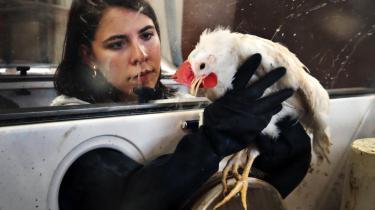 Fuglelaboratoriet i Venedig forsker særligt i svineinfluenza og fugleinfluenzaen SARS. De midler, som de netop har modtaget fra EU Kommisionen, skal blandt andet skal sikre en bedre kommunikation til omverdenen, når en ny trussel opstår.