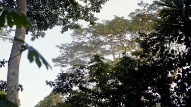 Efter mange års massiv rydning af skovene og venten på EU sker der omsider noget nyt på området i morgen, tirsdag.