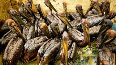Det var ikke billeder af olieindsmurte fugle langs kysten i Den Mexicanske Golf, som prægede en konference   i olieindustrien i går, men derimod billeder af boreplatforme i solnedgang