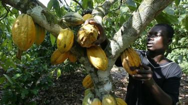 I fredags erhvervede hedgefonden Armajaro 240.100 tons kakao, hvilket svarer til syv procent af den årlige, globale produktion. Spekulationen i fødevarer rammer i sidste ende de fattigste i verden, fordi det bliver umuligt at betale prisen på almindelige fødevarer.