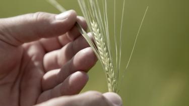 Vi skal frem mod reformen af EU's landbrugspolitik i 2013 have en debat med indhold - ikke et slagsmål om for eller imod land-brugsstøtten, mener Lone Saaby.