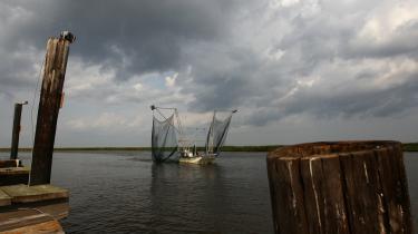 Rejesæsonen i Golfen er lige begyndt, og alle er spændt på udkommet. Rejefiskeren Daniel May tøffer her sin lille 'rejekutter' gennem en såkaldt bayou, en lille flodforgrening ved DuLarge i Louisiana.  De mange bayous er hjemsted for skaldyr som krebs, rejer og muslinger.