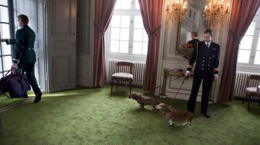 Hofhunde. I Amalienborgs realityshow er selv de kongelige hofhunde under uniformeret opvartning - og holdt i kort snor.