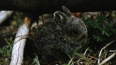 Naturen, blandt andet den vilde hare, er truet, og oppositionen vil gøre op med regeringens manglende indsats.
