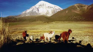 Det nøgne landskab kun befolket af vicuñaer med de dybe farver indbyder enhver fotoglad turist til at knipse løs konstant.
