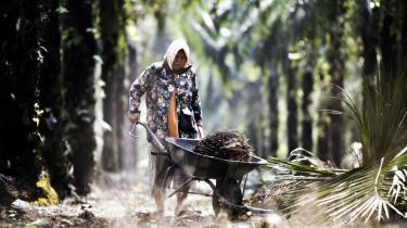 Palmeolieplantager i Asien, her Malaysia, er typisk hårde ved både den lokale natur og ved klimaet via bl.a. afskovning. Afbrændningen af jungle udleder store mængder CO2.   Det voksende antal plantager har svært ved at kunne kaldes bæredygtige.