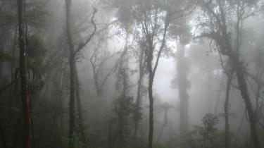 Der bør tages vigtige beslutninger på Rio+20-mødet, blandt andet for at bevare verdens skove.