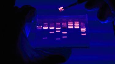Generne kan pludselig sætte en stopper for familiedrømmene.