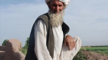 Khan Mohammed dyrker safran, hvede og byg på sine marker. Mange bønder i det vestlige Afghanistan har droppet opiumdyrkningen til fordel for netop safran, der er verdens dyreste krydderi.