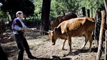 'Bolivia illustrerer bedre end noget andet land, hvordan den rettighedsbaserede udvikling fungerer,' siger udviklingsminister Christian Friis, som her ses under et nyligt besøg i landsbyen Macheratí i Bolivia.