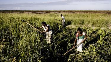 Mange lande i Afrika oplever stor fremgang og vækst, og det skal dansk bistand hægte sig på. Disse kvinder slider dog på traditionel vis i marken uden moderne hjælpemidler ved i Mozambique.
