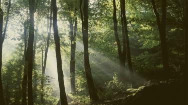Her er grønne træer. Brevet, det kommer altid fra et konkret sted, det har afsenderadresse, poststempel, det udpeger den skrivendes krop, jeg skriver til Dem fra Østjylland, brevet har geografi.