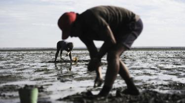 Hundredvis af arbejdsløse portugisere samler hver dag ulovligt muslinger i mudderet i Tejo-flodens munding ved lavvande for at tjene en smule penge. Finans- og kreditkrisen har ramt Portugal – og mange andre lande – meget hårdt.