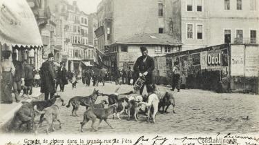 Postkort fra Istanbul i begyndelsen af 1900-tallet, da byen hed Konstantinopel og husede op mod en kvart million gadehunde.