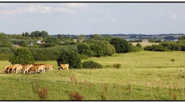 Selv om den nye landbrugsreform betyder, at 30 procent af den direkte landbrugsstøtte bliver hængt op på krav om, at de europæiske landmænd i fremtiden gør noget for miljøet, så er det alt for lidt, mener kritikere.