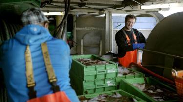 Med de nye trawlere kan de store rederier overvinde alle havbundens fysiske barrierer, fortæller Jan Olsen, der her er i færd med at sortere dagens fangst.