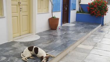 Mediedækningen af de græske tilstande og landets krise er i høj grad præget af en meget begrænset fortælling, som insisterer på, at krisen udelukkende er grækernes egen skyld, og årsagen er, at de er dovne og uarbejdsomme. Det er meget forkert. Foto: Scanpix