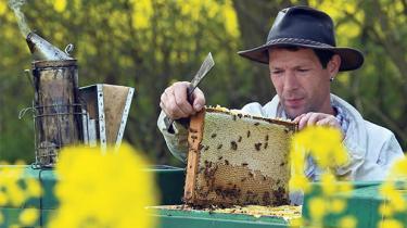 Bier, regnorme og andre livsformer, hvis trivsel er nødvendig for dyrkning af sunde afgrøder, lider i kritisk grad under brugen af en ny generation af insektbekæmpelsesmidler, advarer ny videnskabelig undersøgelse