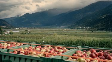 Det meste af Vinschgau-dalen er plastret til med æbleplantager. Der er reelt ikke mere uopdyrket land i den midterste del af dalen, og prisen på jord er mere en firdoblet i løbet af få år.