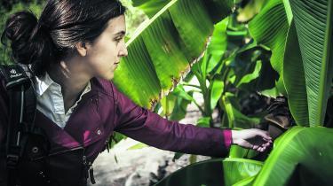 På bjerget har Naia MoruetaHolme fulgt den tyske forsker Humboldts tradition for at samle planter, og gennem dem kan hun aflæse klimaforandringernes effekt.
