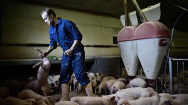 Landmænd skal sænke deres CO2-udslip, mener Radikale. Men det skal kun ske, hvis det bliver gennem EU, mener Venstre.